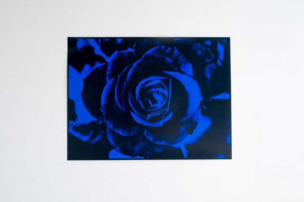 Rose, 2017, Archival Pigment Print, 18.5